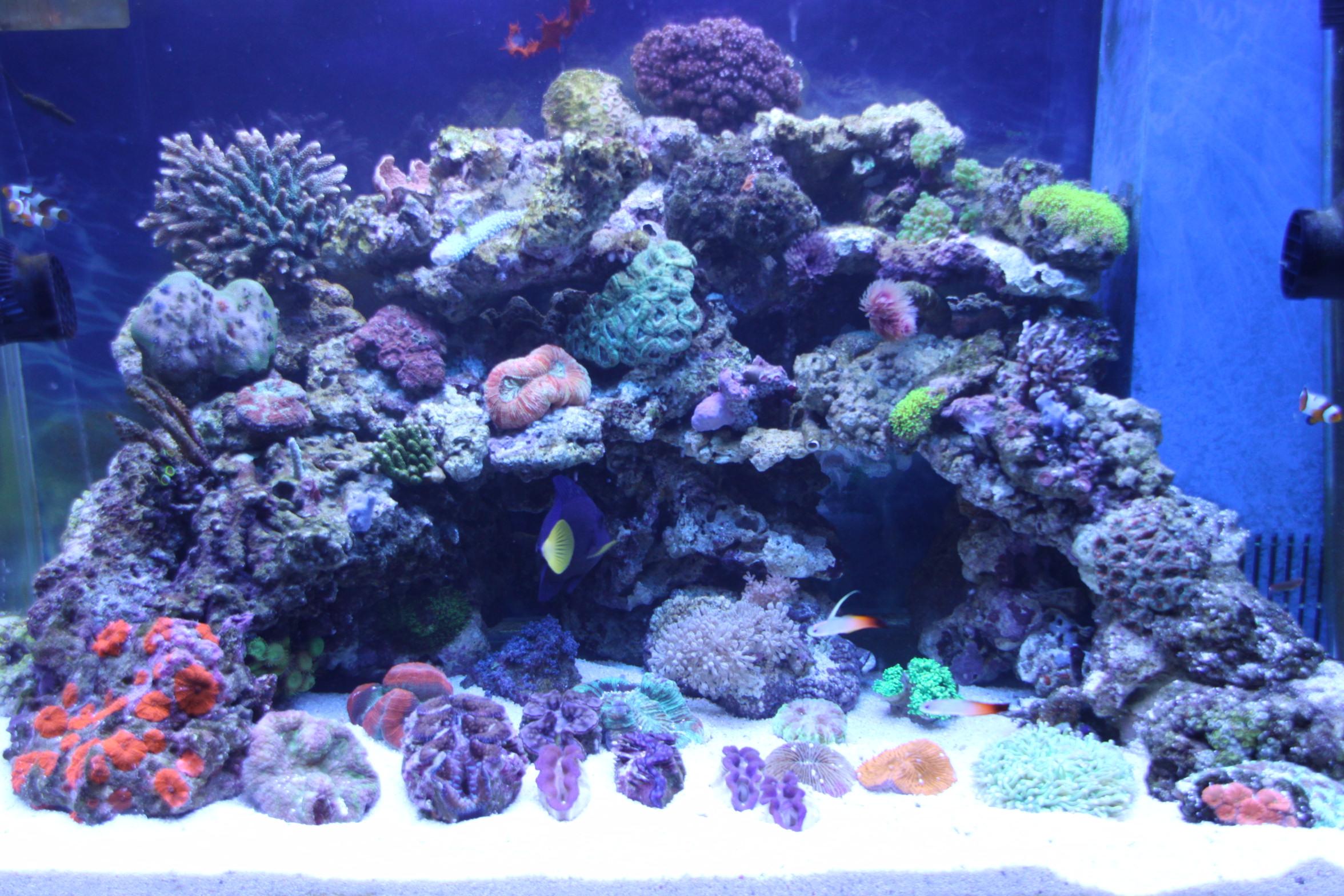 海缸(3)图片