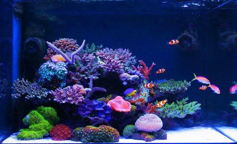 小型海水缸造景